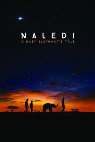 newportFILM: Naledi: A Baby Elephant's Tale